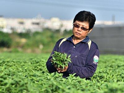 竹林有機農場