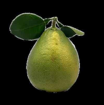 台南柚子 2183 斤