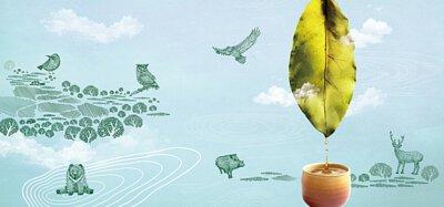 來自梨山黑森林的純淨甘露 梨山茶