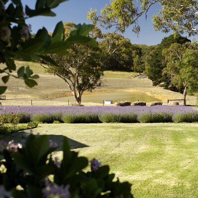 Organically and Bio-dynamically certified, Claret Ash Farm is at the heart of Janesce.  Claret Ash Farm