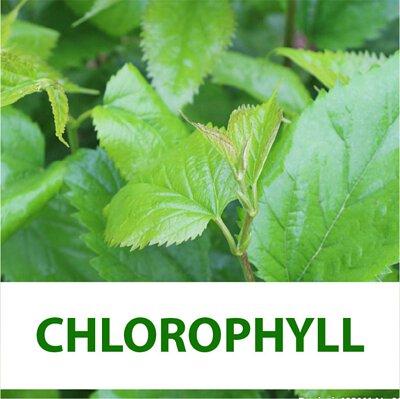 mulberry leaves chlorophyll, chlorophyll