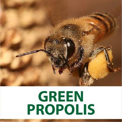 green propolis, propolis, bee wax, brazil green propolis