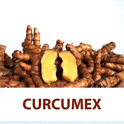 curcumin, curcumex, covid