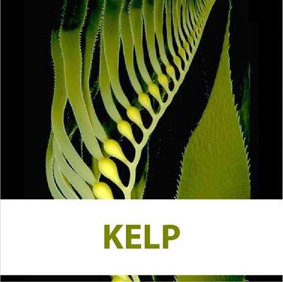 kelp, japonica laminaria