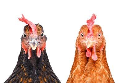 營養師推薦這樣挑滴雞精