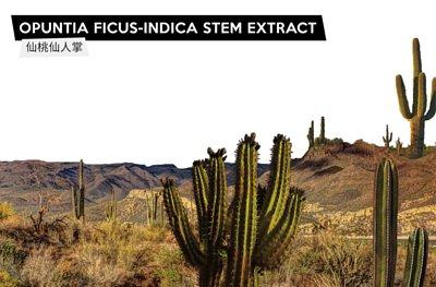 高含水墨西哥仙人掌保濕成分