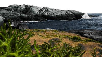 軟毛松藻萃取為神秘的海洋保濕因子