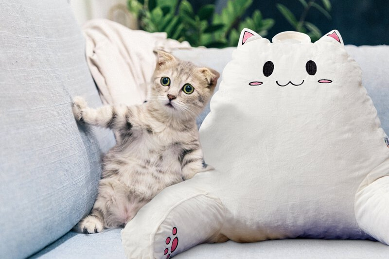 Shredded Memory Foam Back Pillows for Sitting in Bed,Back Support Chair Pillow with Arms,Support for Reading,Relaxing,Watching TV,Gaming-Perfect for Children//Girls SUNSIDE Cute Cat Reading Pillow