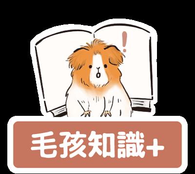 毛時光Maomory- instagram