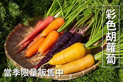 彩色胡蘿蔔新鮮上市